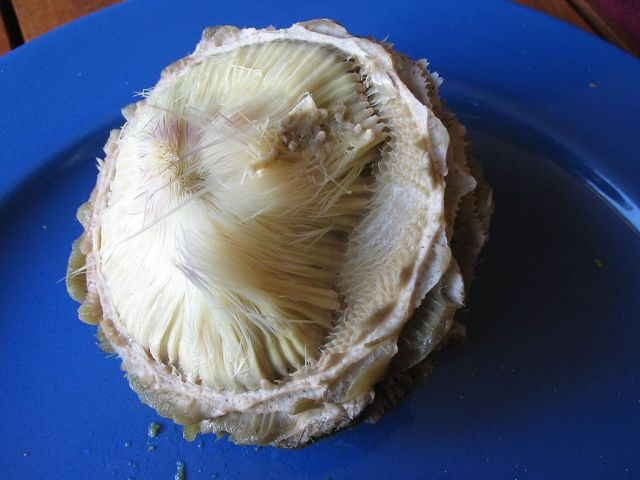 An artichoke heart. Photo by DocteurCosmos, via Wikimedia Commons.