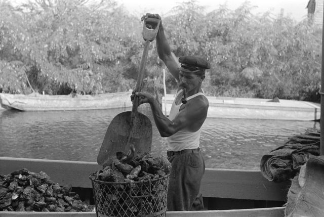 An oysterman unloading oysters in the town of Olga, Louisiana in 1938. Photo by Russell Lee.