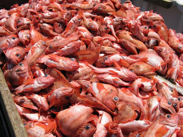 redfish public domain