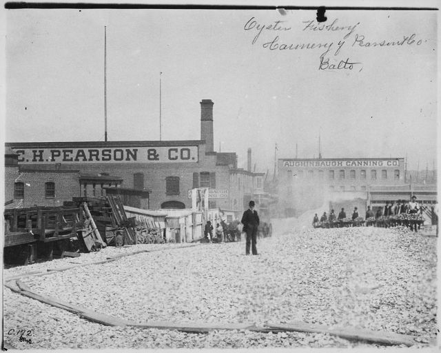 Man with a derby hat stands atop a mound of oyster shells outside the C.H. Pearson & Company Oyster Cannery in Maryland, c. 1890. Photo from Wikimedia Commons and NARA.